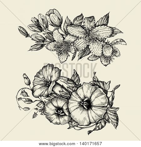 Flower. Hand-drawn sketch bindweed, tutsan, hypericum Vector illustration