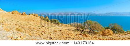 The poor vegetation on the dry soil of Judean desert Ein Gedi Israel.