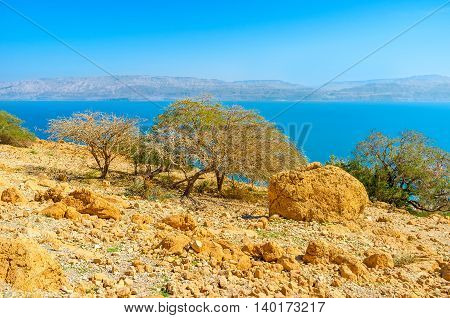 The green trees on the desert rocky with the Dead Sea in the distance Ein Gedi Israel.