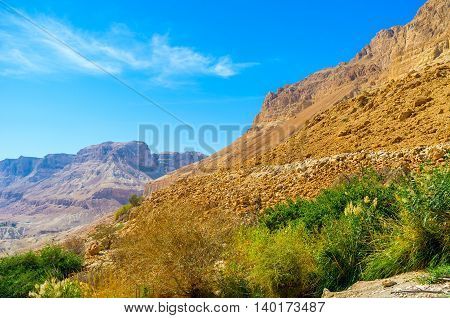 The green plants in desert grow downstream the creek Ein Gedi Israel.