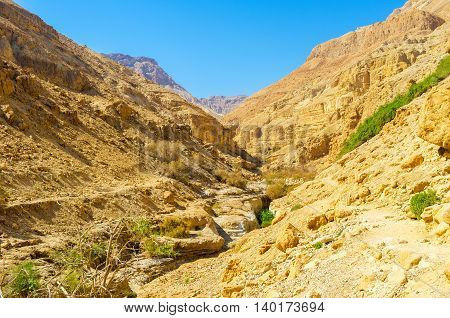 The rocky gorge boasts green plants growing along the mountain river Ein Gedi Israel.