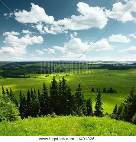Pine trees green meadows and blue sky with clouds poster
