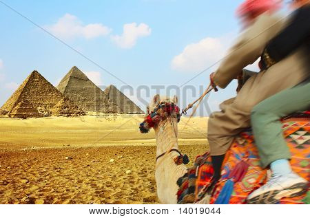Tourist and bedouin riding on camel to pyramids
