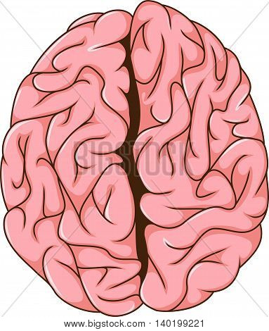 human left and right brain cartoon for you deisgn