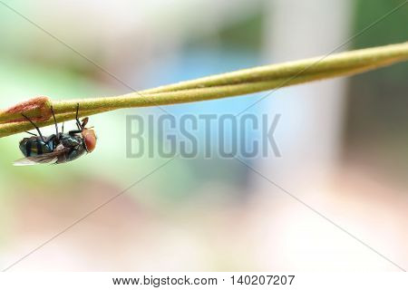 Closeup of Fly in the nature. Fly red eyes macro photo