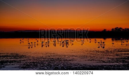 Beautiful sunset panorama with flamingos silhouettes, national park Camargue, Provence, France