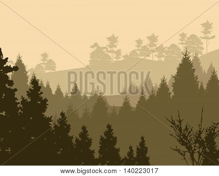 beauty afternoon view with pine forest background