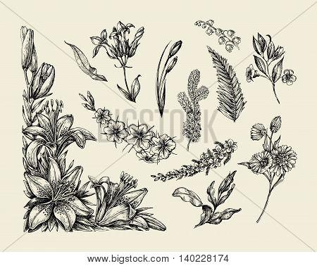 Flowers. Hand-drawn sketch flower, lily, fern, grass, herb bracken lilia Vector illustration