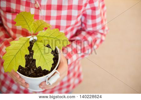 Sprout a young oak tree in a child hands. The concept - the life beginning care successful future growth. Oak sapling in hands. Boy going to plant a new oak tree in the garden.