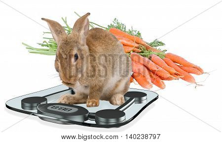Cute bunny rabbit looking surprised at the scale