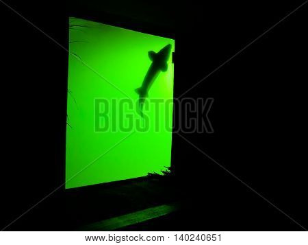 Green aquarium in the dark with shadow of fish