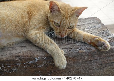 Orange cat is sleeping on the open air outside