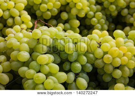 Grapes Closeup - Bonch Of Green Grapes