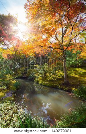The warm autumn sun shining through colorful treetops in park in Kyoto, Japan.