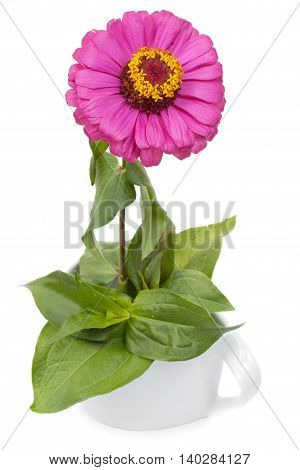 Tsinii Pink Flower With Leaves In Ceramic Ware, Isolated On A White Background.