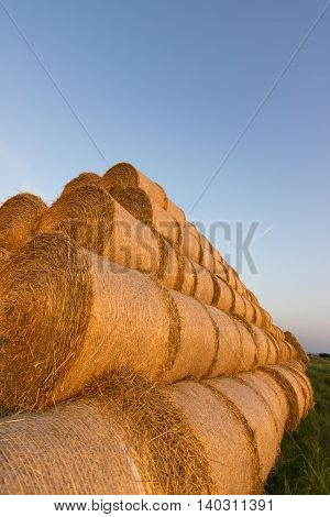 Straw bales on farmland. Bale of straw. Straw bales. Selective focus  Straw bales stacked on the pile