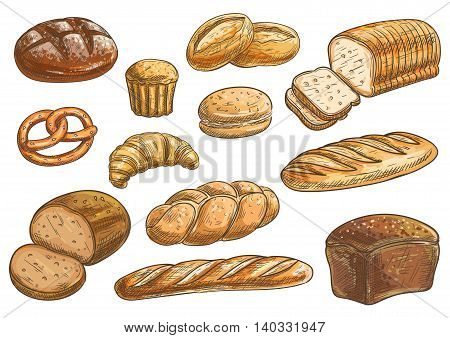 Bread sorts and bakery icons. Vector pencil sketch rye bread, ciabatta, wheat bread, muffin, bun, bagel, sliced bread, french baguette, croissant pretzel biscuit