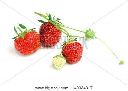 close up on fresh strawberries on white background