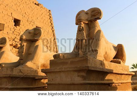 Goat statues in the Avenue of Sphinxes at the entrance of Karnak in Luxor Egypt Africa