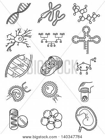 Vector simplicity science icons set with genetic and microbiological objects. Medical collection with DNA and RNA molecule neuron and embryo cells in vitro fertilization process Genetic Engineering