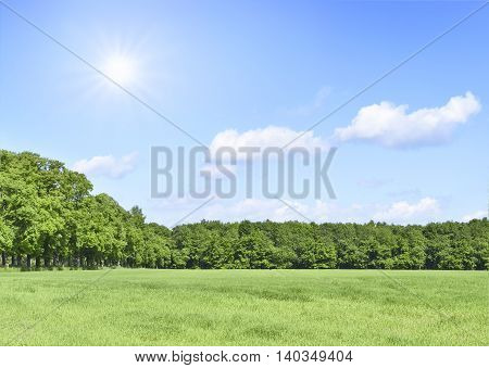 Summer scene with sun, green meadow and an alley of trees. Forest and green field with blue sky and sunbeam. Nature background with copy space.