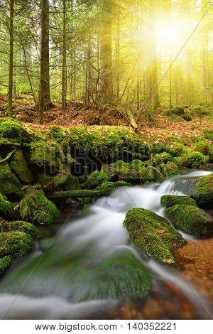 Mountain stream in the National park Sumava-Czech Republic