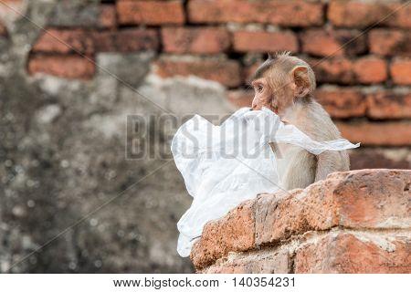 Monkey With Garbage In Prang Sam Yot In Lopburi, Thailand.