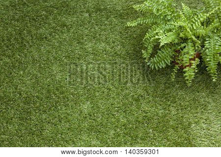 Flooring of artificial grass and a potted fern on it