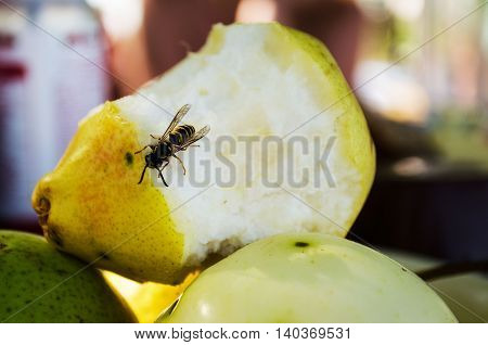 Common wasp on pear.The bees collect pear fruit sweet juices.