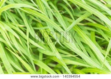 The lush grass is a clump of bushes . Leaves rustle the wind(soft focus)