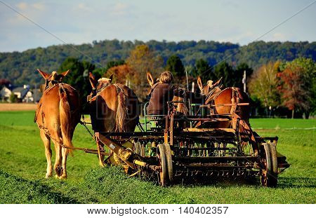 Lancaster County Pennslvania - October 15 2015: Amish youth cutting grass seated on a thresher pulled by four donkeys