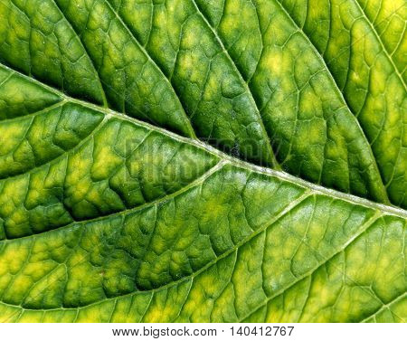 Abstract Color Leaf Texture.