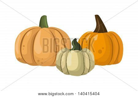 Autumn collection of pumpkin set elements design with different pumpkins oriental bittersweet vector illustration. Orange halloween pumpkin set vegetable collection. Harvest symbol season decoration.