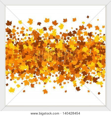 Vector pattern of scattered maple leaves in autumn colors. Isolated.