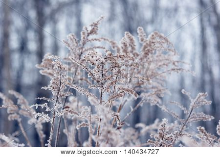 frozen plant in front of forest. Christmass winter seasonal background