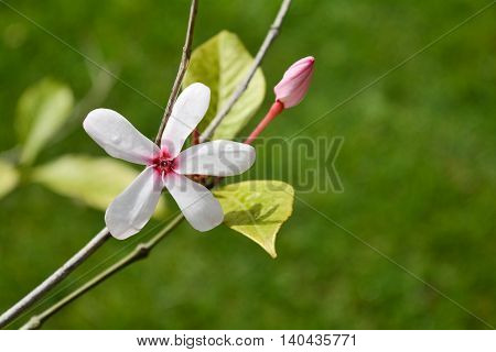 Flower with green leaf burry background in morning time.