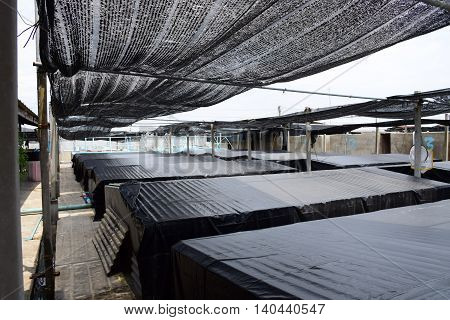 Aquatic animals. Shrimp concrete farming. A fish hatchery in Thailand.