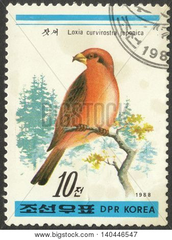 MOSCOW RUSSIA - CIRCA APRIL 2016: a post stamp printed in the NORTH KOREA shows a bird Loxia curvirostra japonica the series