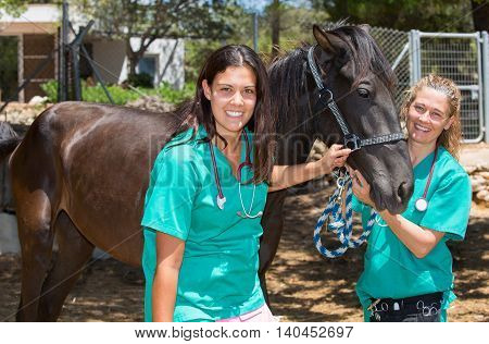 Two young veterinary conducting a review to a young colt