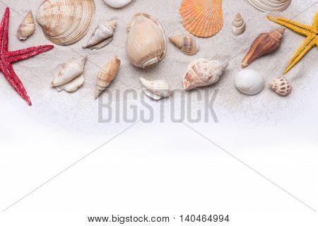 Seashells and starfish on a white background. Copy space for your text.