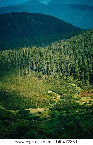 Amazing summer view on different trees in cloudy mountains. Carpathians, Hoverla, UA