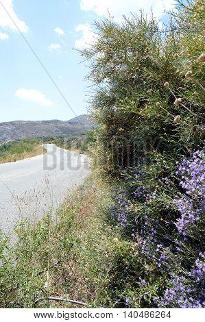 Beautiful garden flowerssummer flower background in the Creta poster