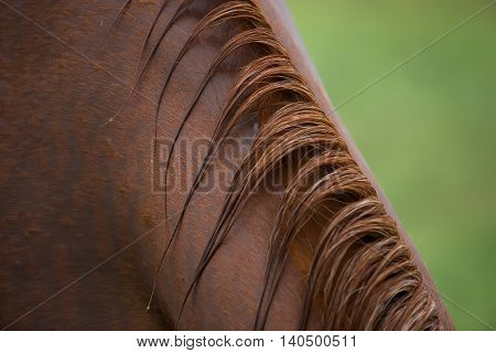 Closeup shot of horse mane after rain