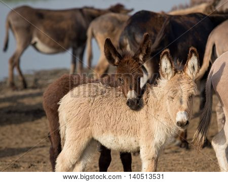Cute Playful Donkeys