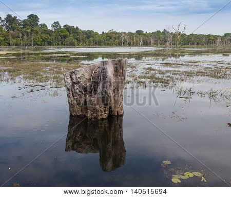 beautiful landscape in the Okavango swamps, Moremi game reserve landscape, Okavango Delta, Botswana