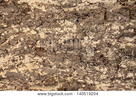 Tree bark texture light brown outer layer surface cork protects plant on woody background