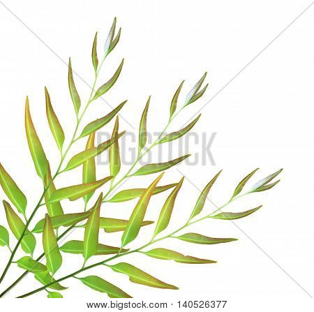 New green cycad leaf isolated on white background