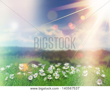 3D render of daisies in grass against a defocussed background with bokeh lights