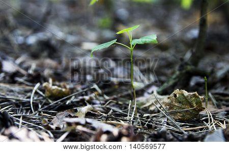 bump fir lies on the undergrowth in the dark