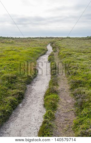 heath vegetation scenery including a foothpath around Pointe de Pen-Hir in Brittany France
